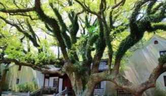 The most expensive tree in the world-The only one in the world